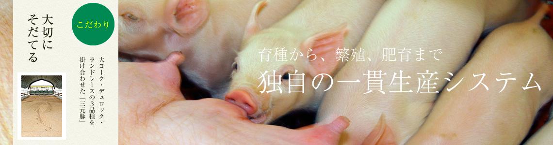 石上ファームの「まごころ豚」